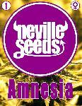 Amnesia Neville 1 Semilla