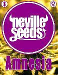 Amnesia Neville 3 Semillas