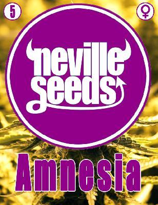 Amnesia Neville 5 Semillas