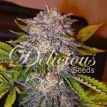 Caramelo 10 semillas