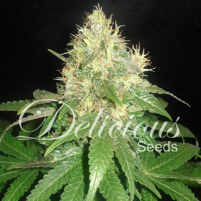 Fruity chronic juice 3 semillas