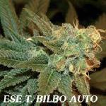 Ese T.bilbo Auto (1) 100% Genehtik Seeds Haziak