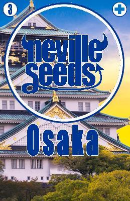 Semillas 21,6% Cbd Osaka 3 Semillas