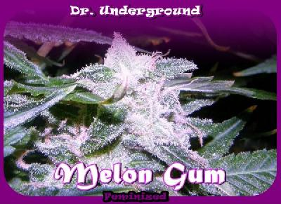 Melon Gum 8 Semillas