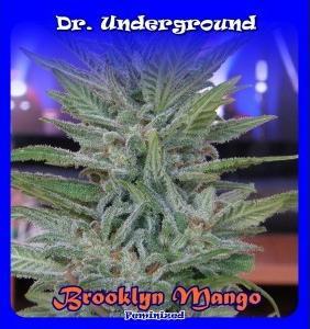 Brooklyn Mango 4 Semillas